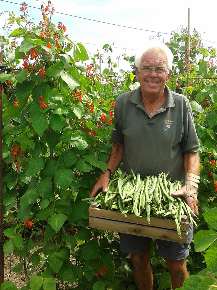 Kiln Farm runner beans