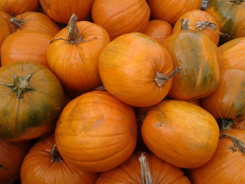 Pumpkins at Kiln Farm