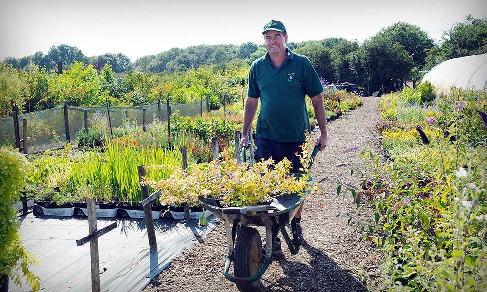 Paul pushing a wheelbarrow full of plants at Kiln Farm Nursery