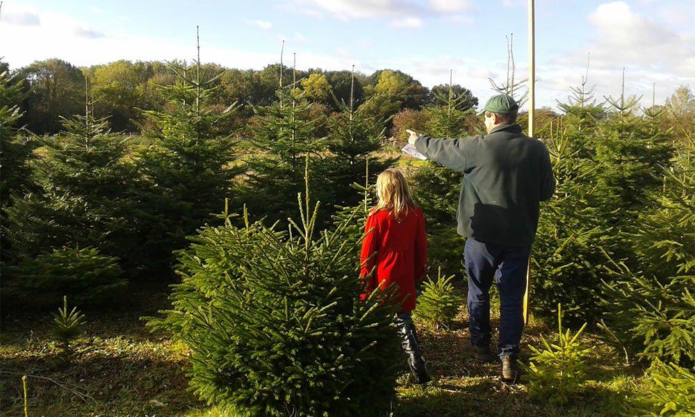 Choose your Christmas Tree at Kiln Farm Nursery