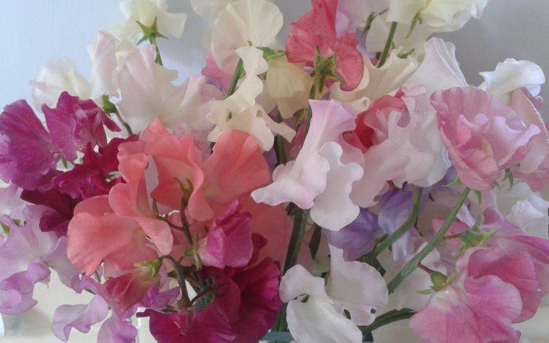 Irresistible Sweet Peas