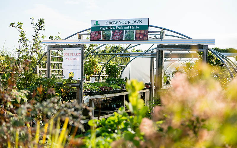 Growing polytunnel