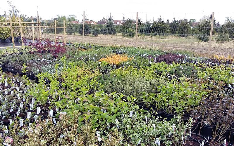 Lots of shrubs growing in pots