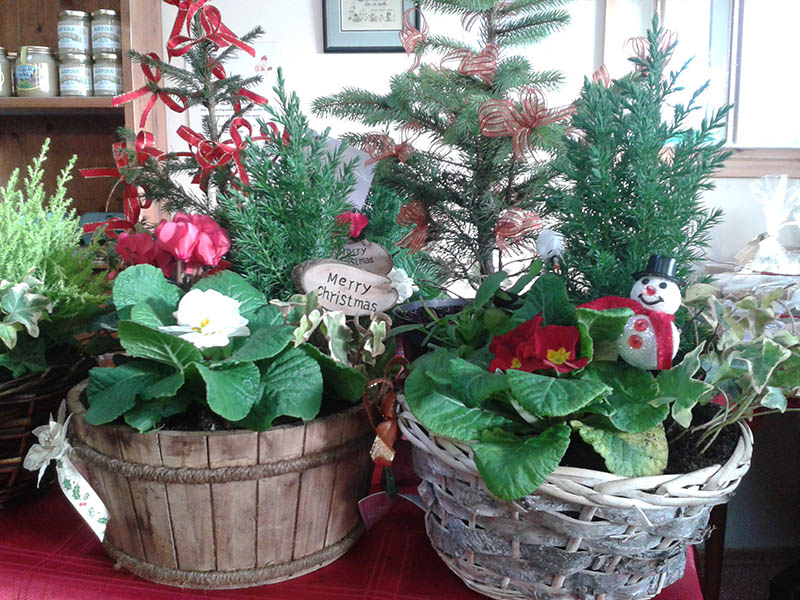 Christmas gift baskets containing plants