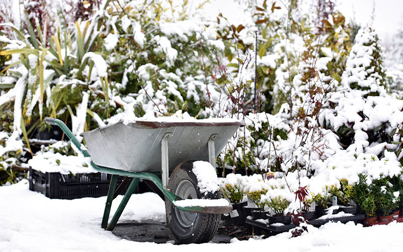 Wheelbarrow in a snowy garden